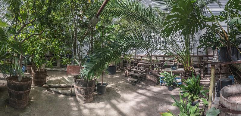 Interior of the Greenhouse in the old botanical garden in Odessa Ukraine photo