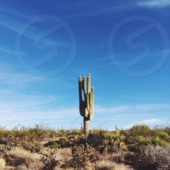 green cactus plant with blue sky background outdoors photo
