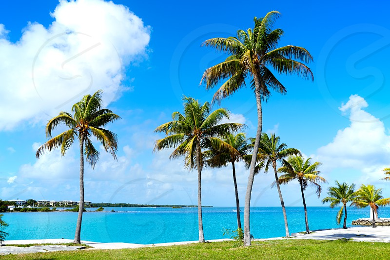 Florida Keys Palm trees in sunny day at Florida USA photo