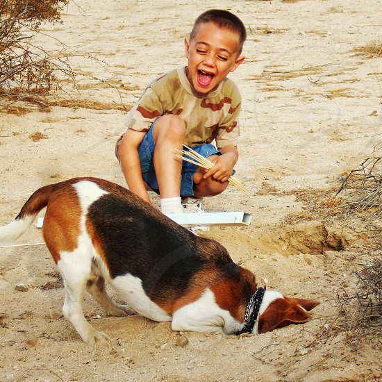 Beagle 's face disappears as he digs a hole. A little boy laughs at him. photo