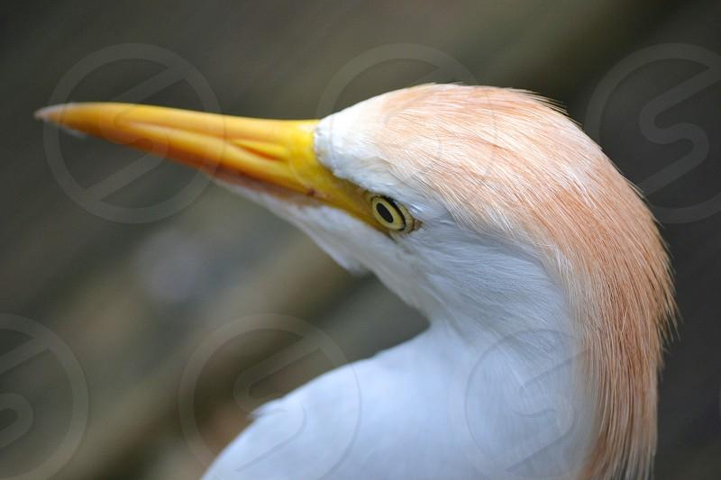 yellow white and brown bird photo