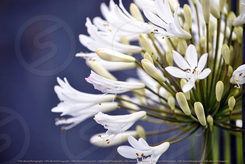 white flowers macro photography photo