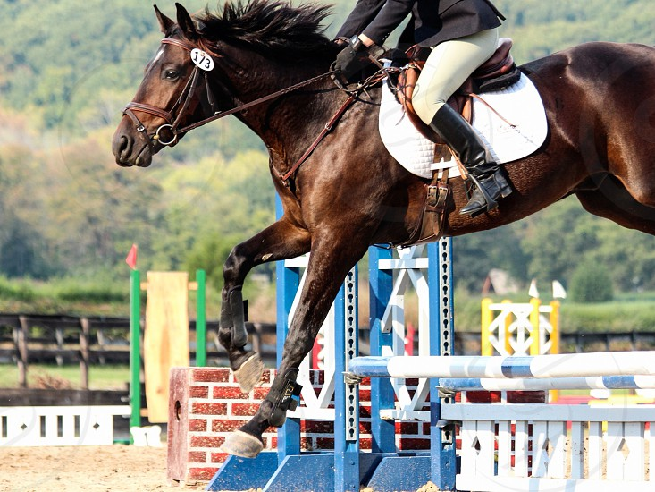 A show jumper and her mount must trust each other in order to succeed. photo