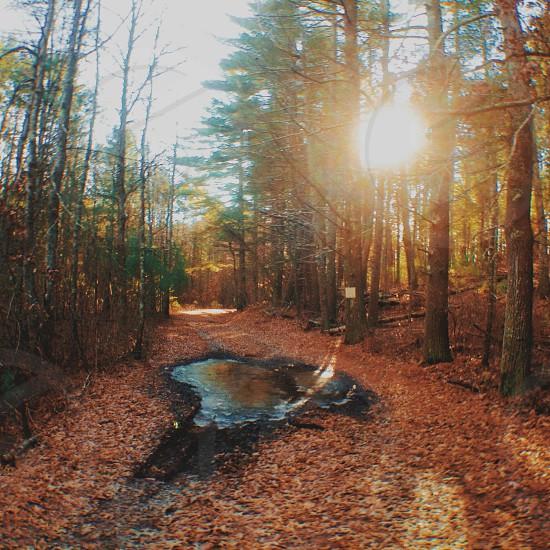 Wandering the Wilderness. photo