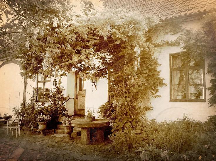 Garden in Stockholm photo