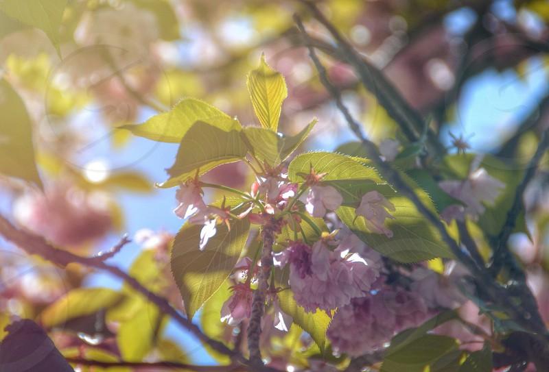 purple plant photo
