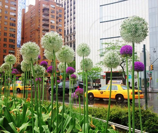Columbus Circle NYC. photo