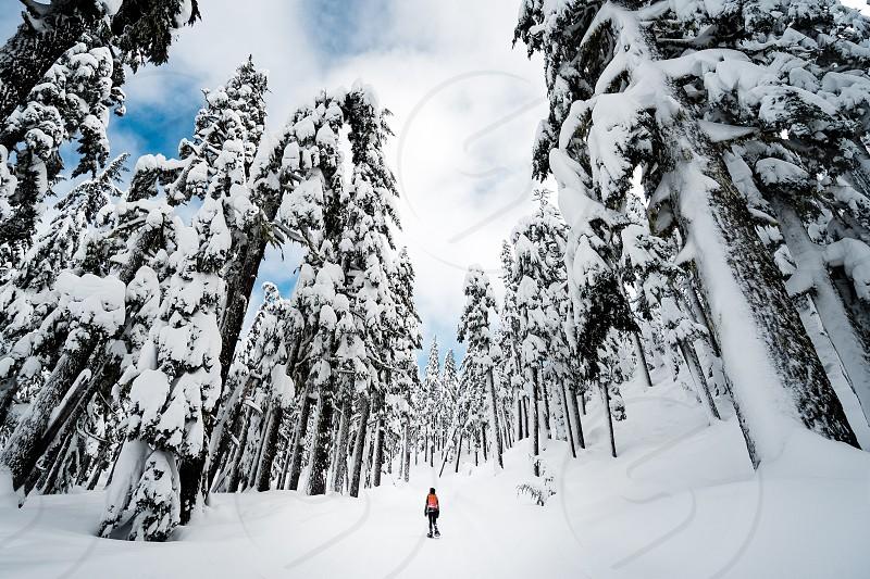 Snowshoeing snow forest woods snowshoe mountain explore Bend Oregon photo