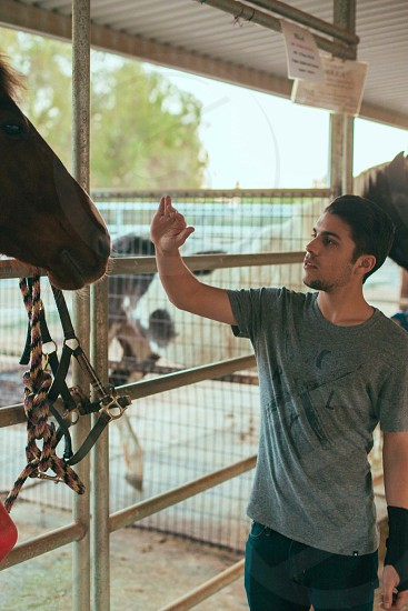 man wearing grey crew neck t-shirt petting brown horse photo