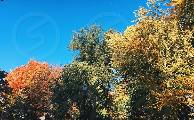 #trees #ilovetrees photo