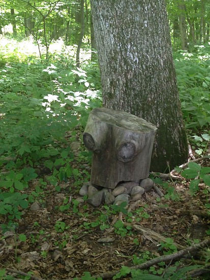 Zeh Boob Stump at the Farmington Mead photo