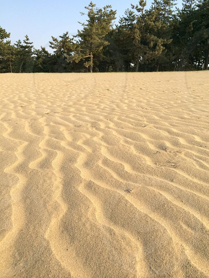 風紋(Wind ripple) photo