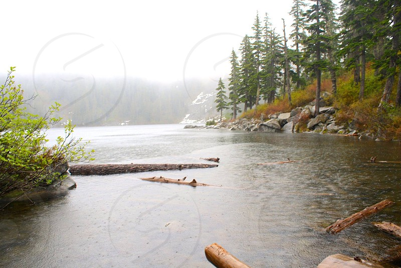 wood logs on the river along pine trees photo
