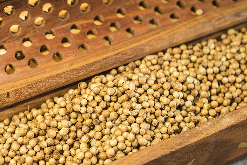 coriander seeds photo