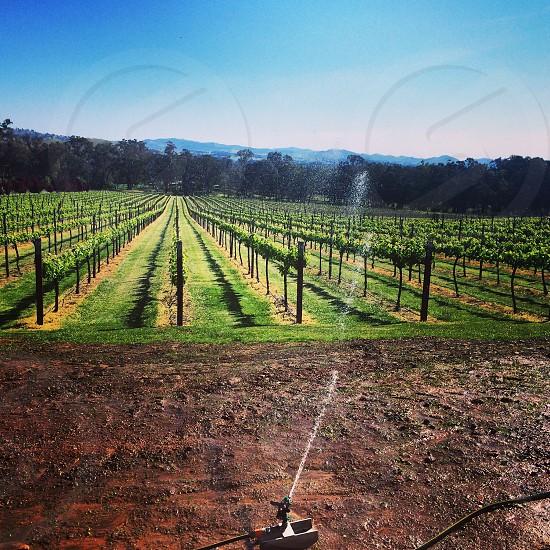 Gapsted Winery / Vineyard. Beechworth Victoria Australia photo