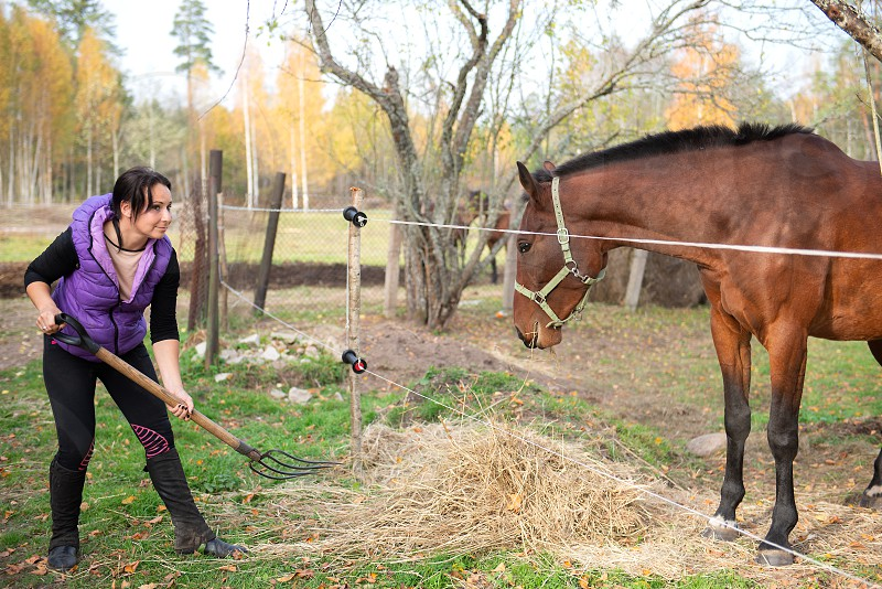 Farmer girl feeds hay to horses. photo