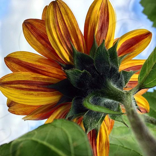 Flower from below photo