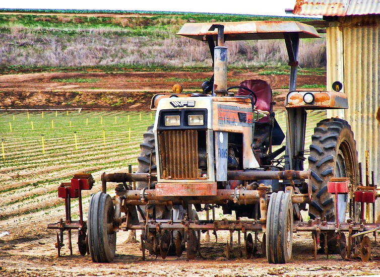 Large farm tractor waits near a field with crops growing in rows. photo