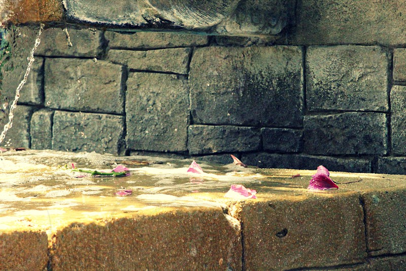 fountain petal petals pink rock stone water sun photo