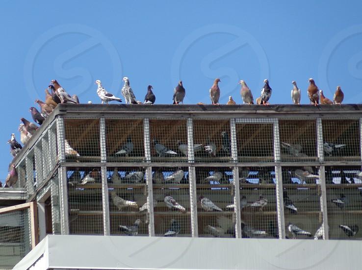 pigeon coop fence storage sky  photo