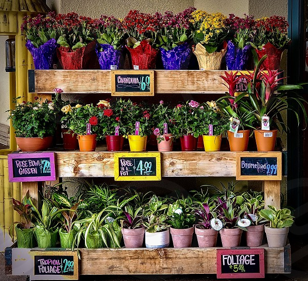Neighborhood Storefronts Request Flower Stand In Front Of Local Store Flower Stand Colorful Flowers For Sale  photo
