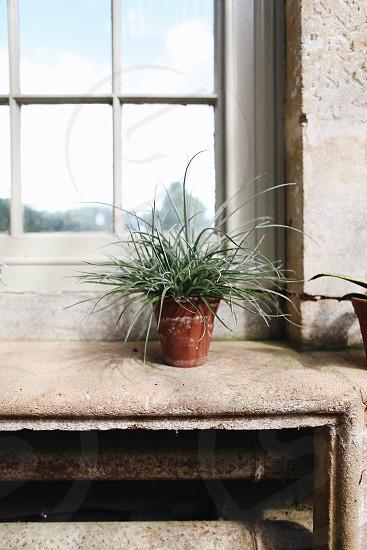 Orangery pot plant stone greenhouse  photo