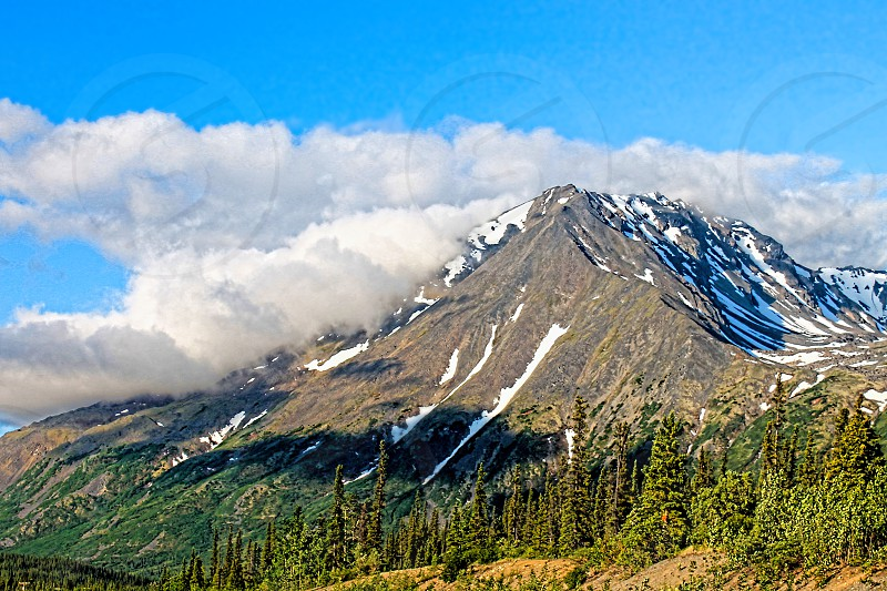 Snow-capped mountain surrounded by pine trees and in the clouds  photo