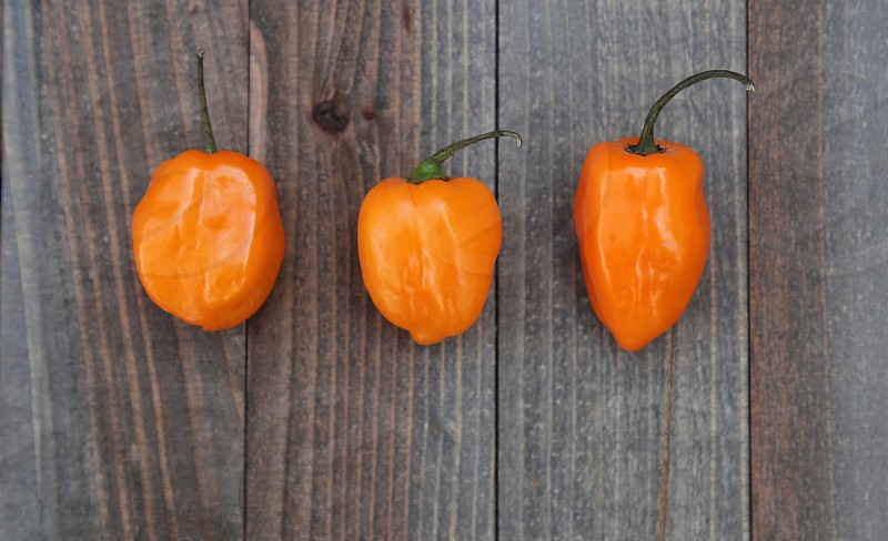Three Habanero Peppers photo