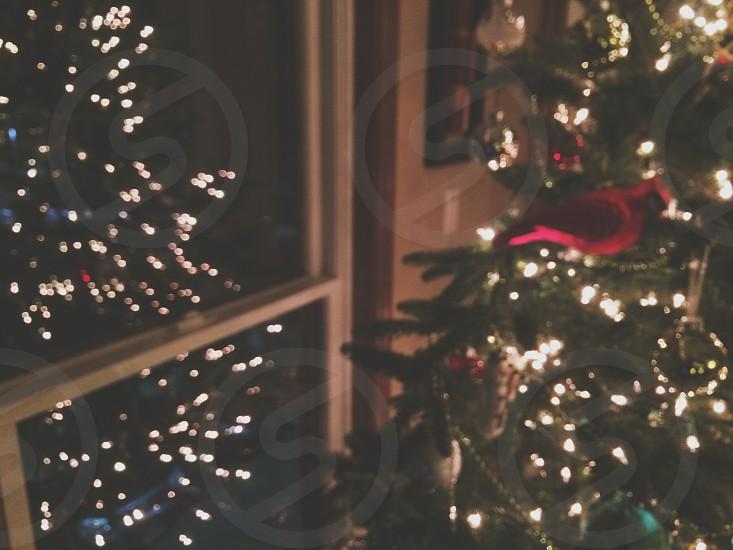 Christmas tree reflection.  photo