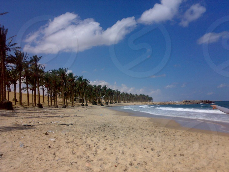 sinaiEgypt .sea.relax.palm.inspiration photo