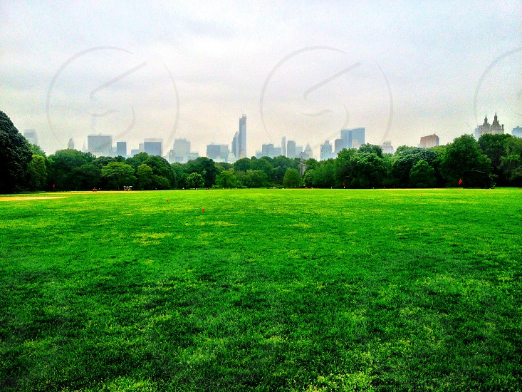 The Great Lawn Central Park photo