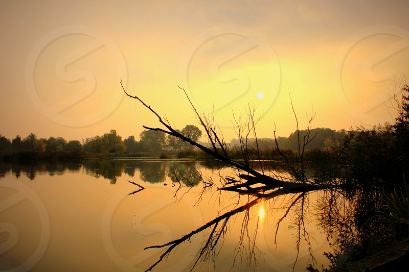Sunset reflection. Trees lake sunset lake tranquility. photo