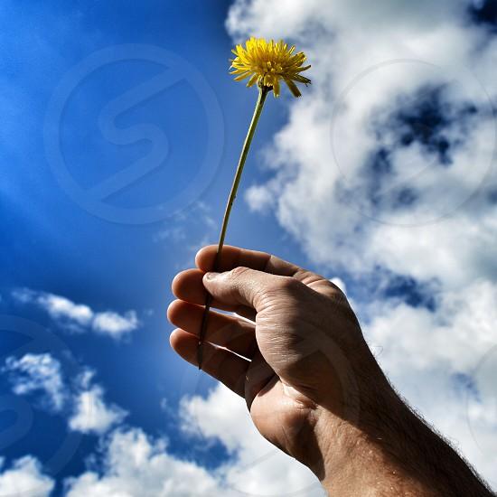 hand showing flower yellow sky photo