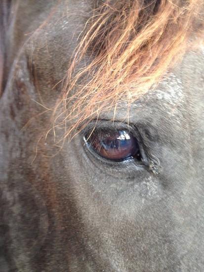 equine contentment photo