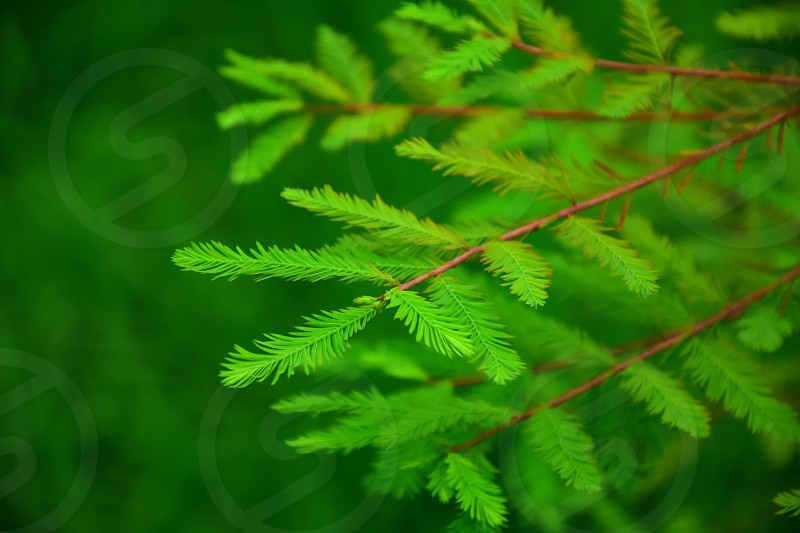 green leafed plant on brown branch seen during daytime photo
