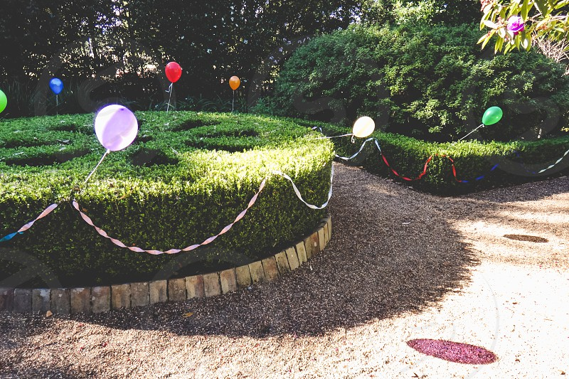 backyard garden ready for a birthday party balloons on hedges  photo