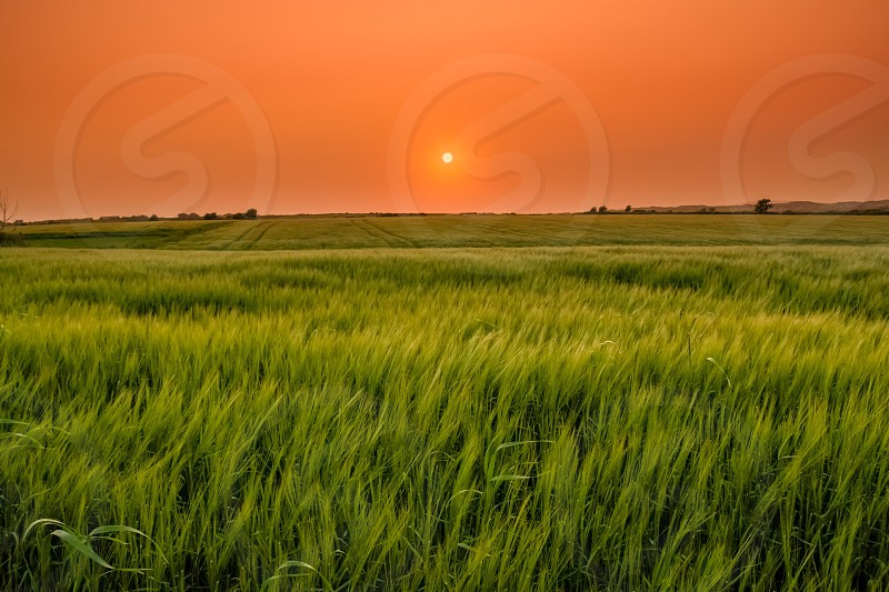 Sunset field corn green landscape ireland Killarney park serenity scenic colourful photo