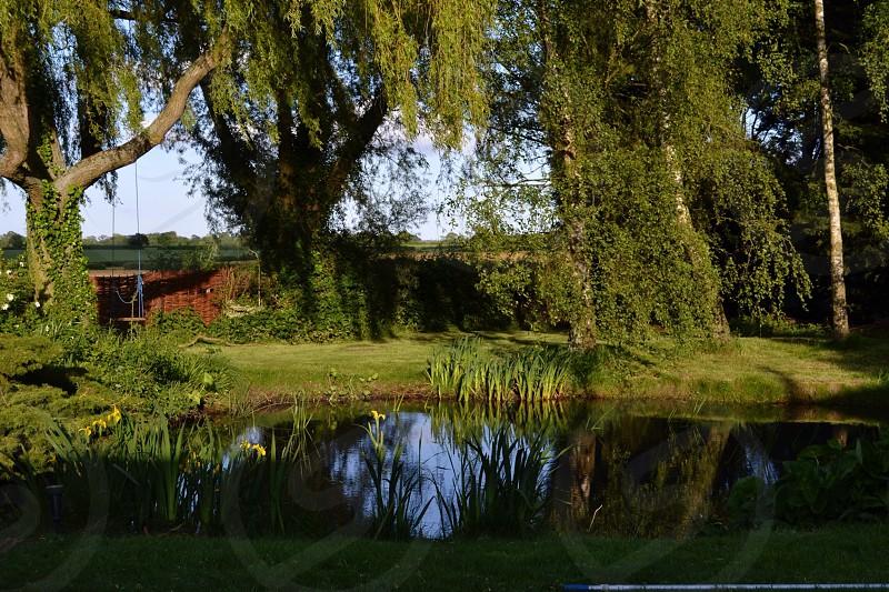 Suffolk pond life photo