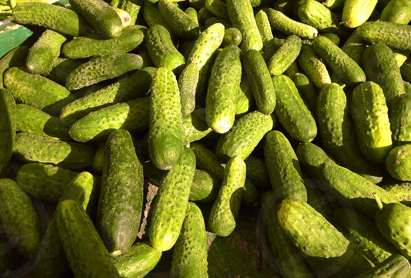 Fresh cucumbers after the harvest photo