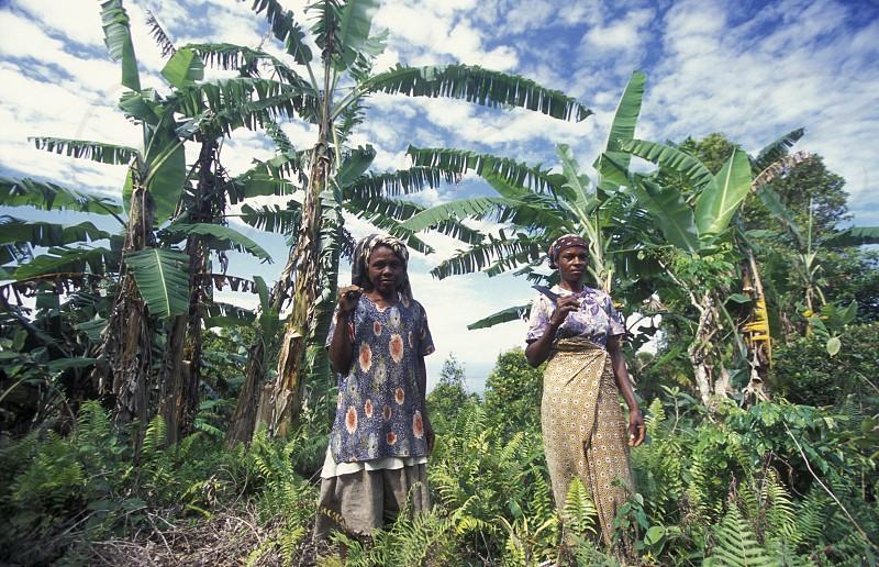 AFRICA INDIAN OCEAN COMOROS ANJOUAN MOYA VILLAGE WOMEN FARMING AGRACULTURE MARKET PEOPLE photo