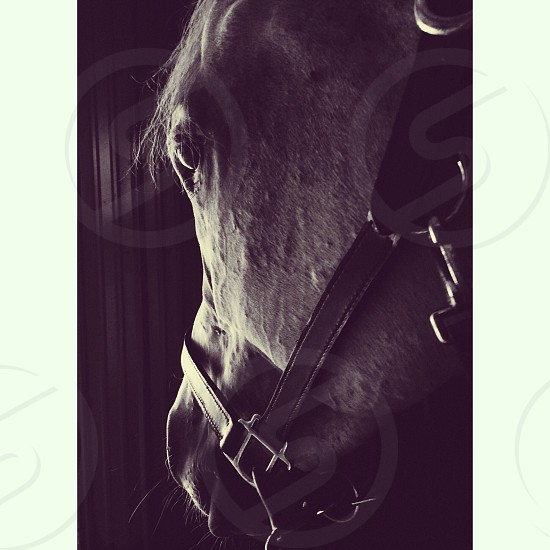 grayscale photography of horse photo