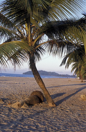 the Beach of Tela near San Pedro Sula on the caribian sea in Honduras in Central America photo