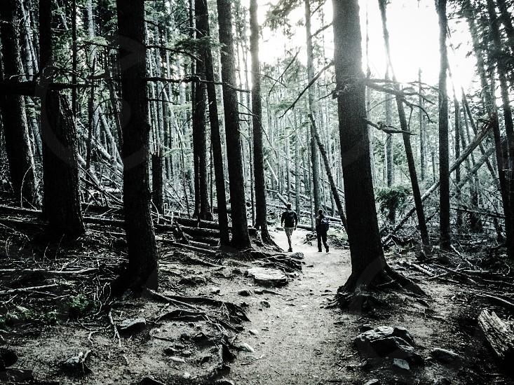 Path through the dark forest... photo