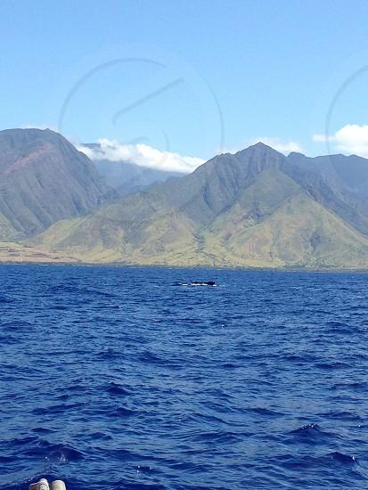 Whale in Maui photo