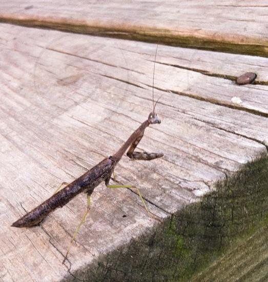 Mantis bug country photo