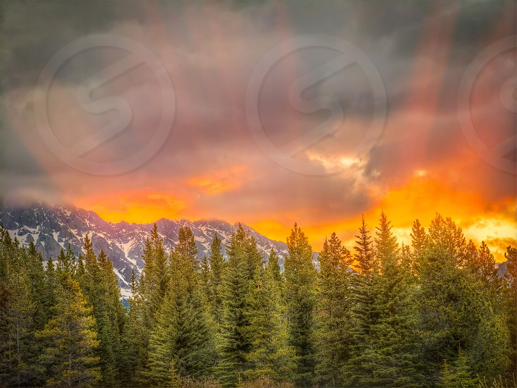 gray clouds over green pine trees photo