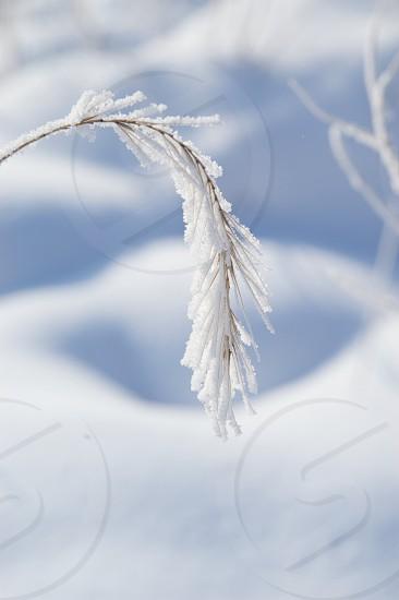 Winter. Snow. Ice.  photo