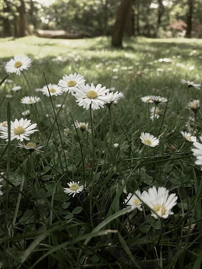 white flowers in garden photo