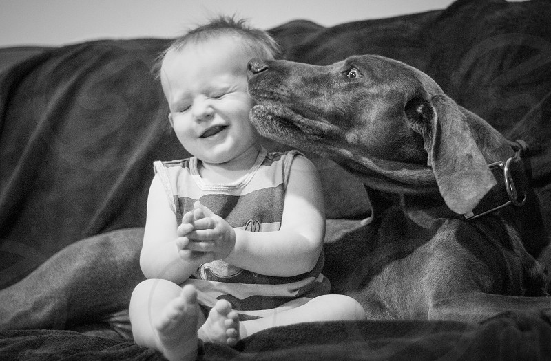 grayscale photo of dog kissing baby's cheek photo
