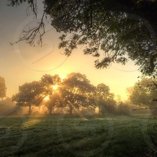 Sunrise through trees in West Berkshire photo